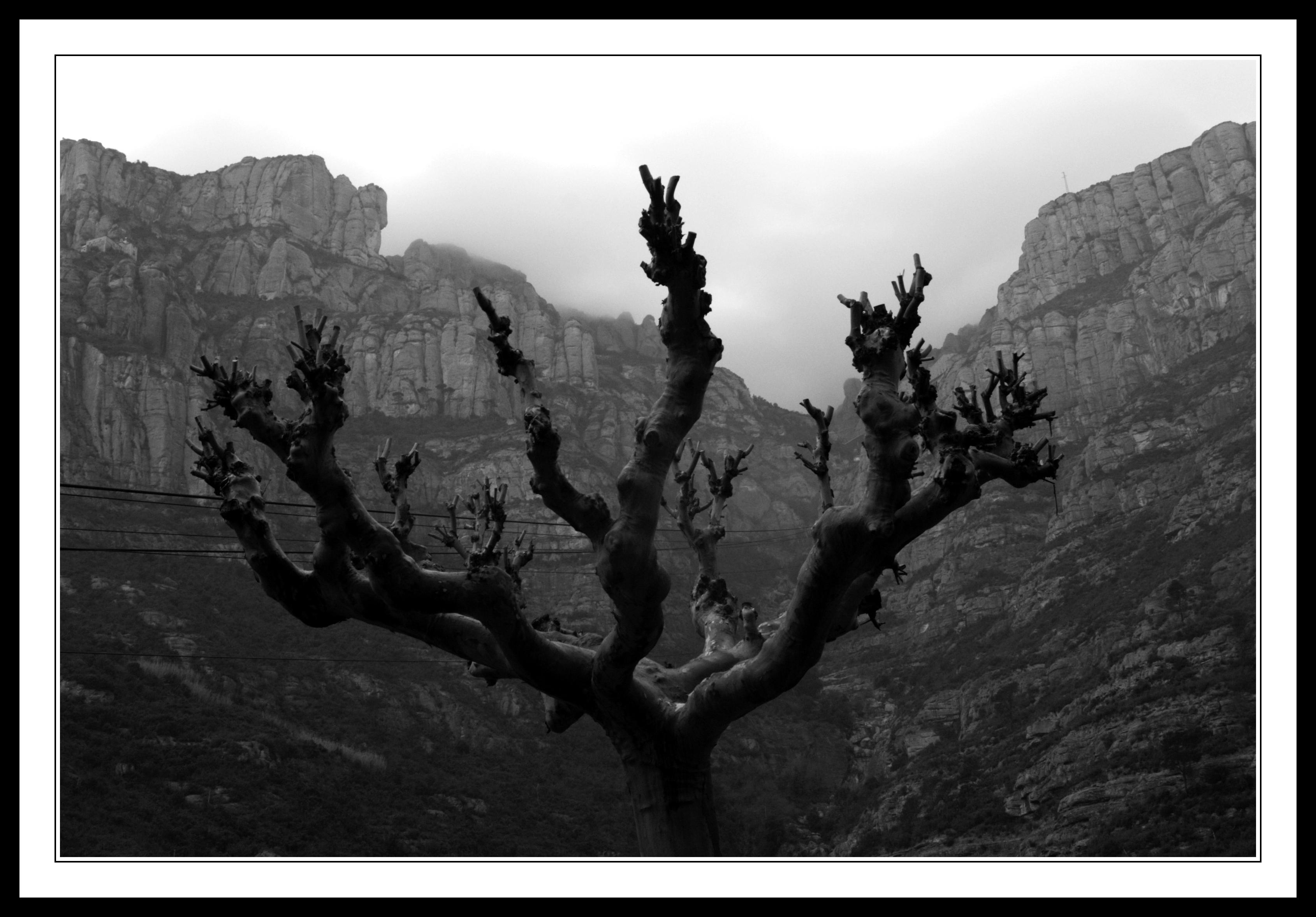 Tree on Montserrat