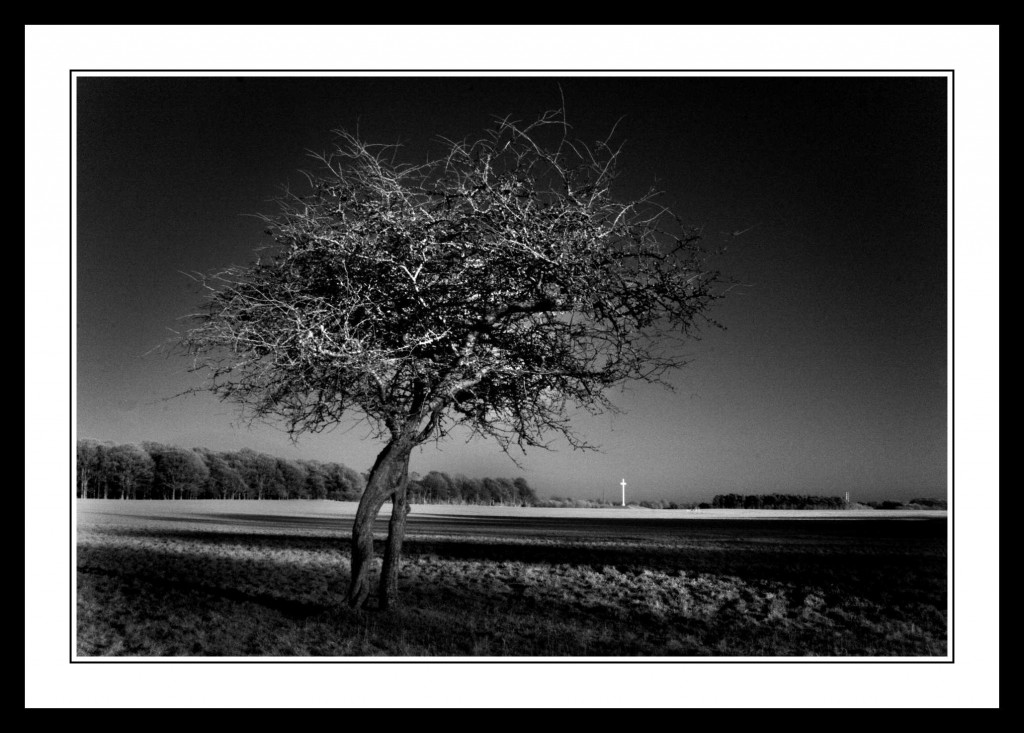 Bare tree and the Popes Cross in The Phoenix Park