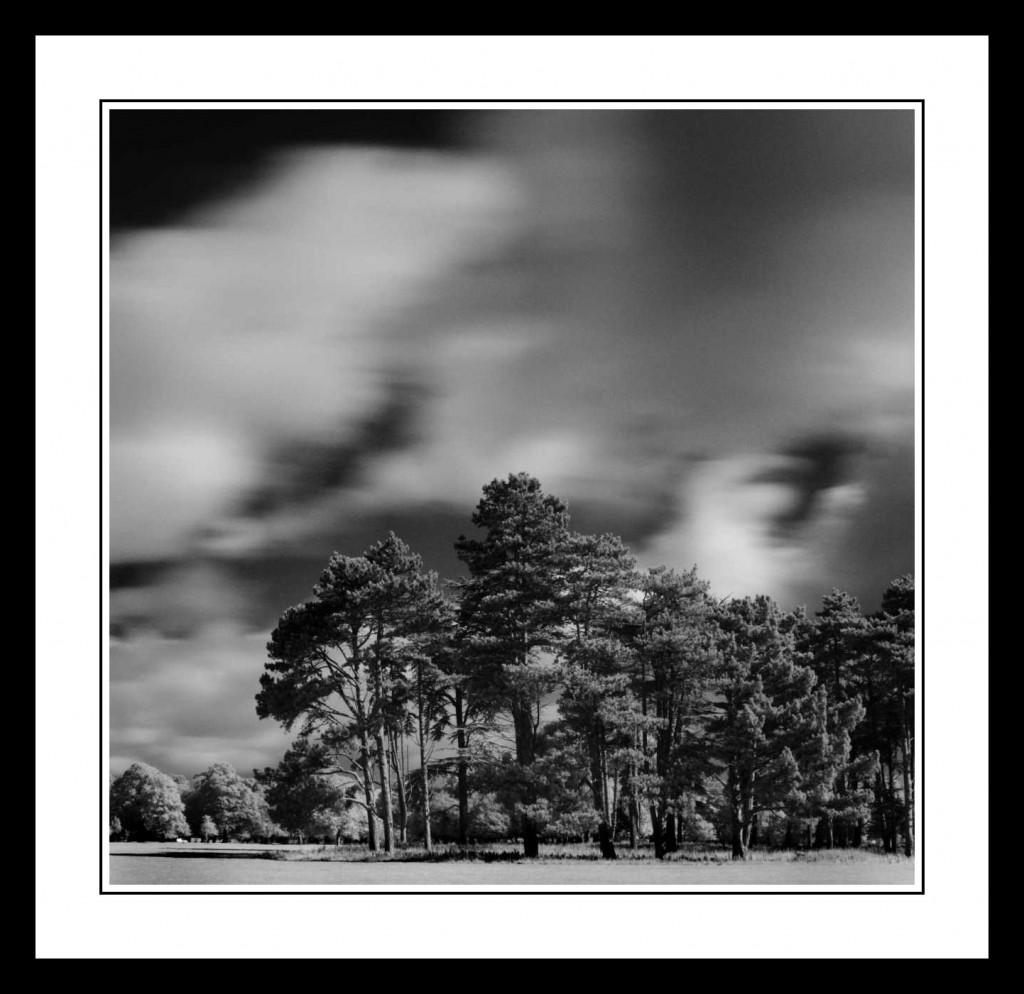 Tall trees in infra red in The Phoenix Park