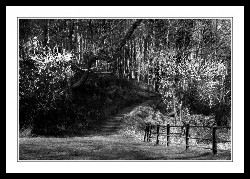 Wooden Steps at Furry Glen in The Phoenix Park