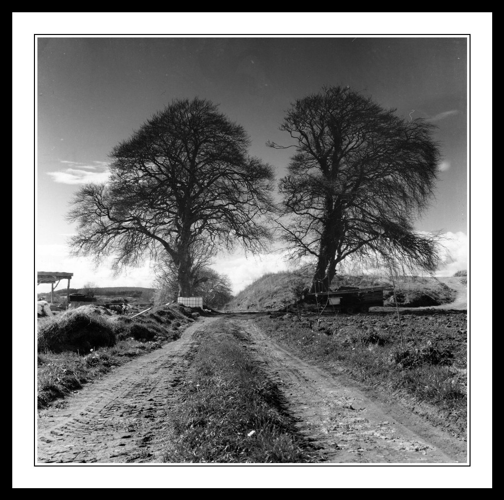 Cloughjordan-Ecovillage-Trees