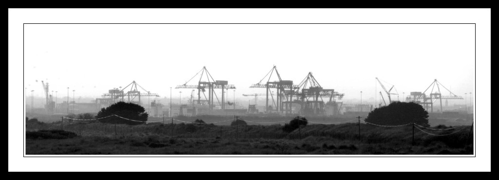 Cranes-on-Dollymount-Strand