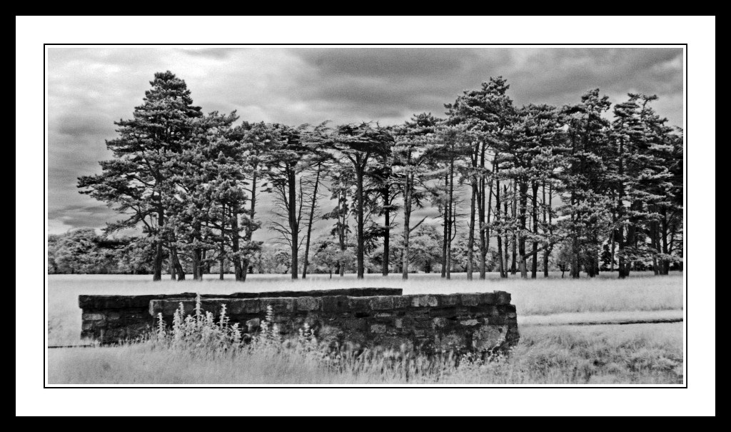 Tall-trees-and-bridge-in-The-Phoenix-Park1