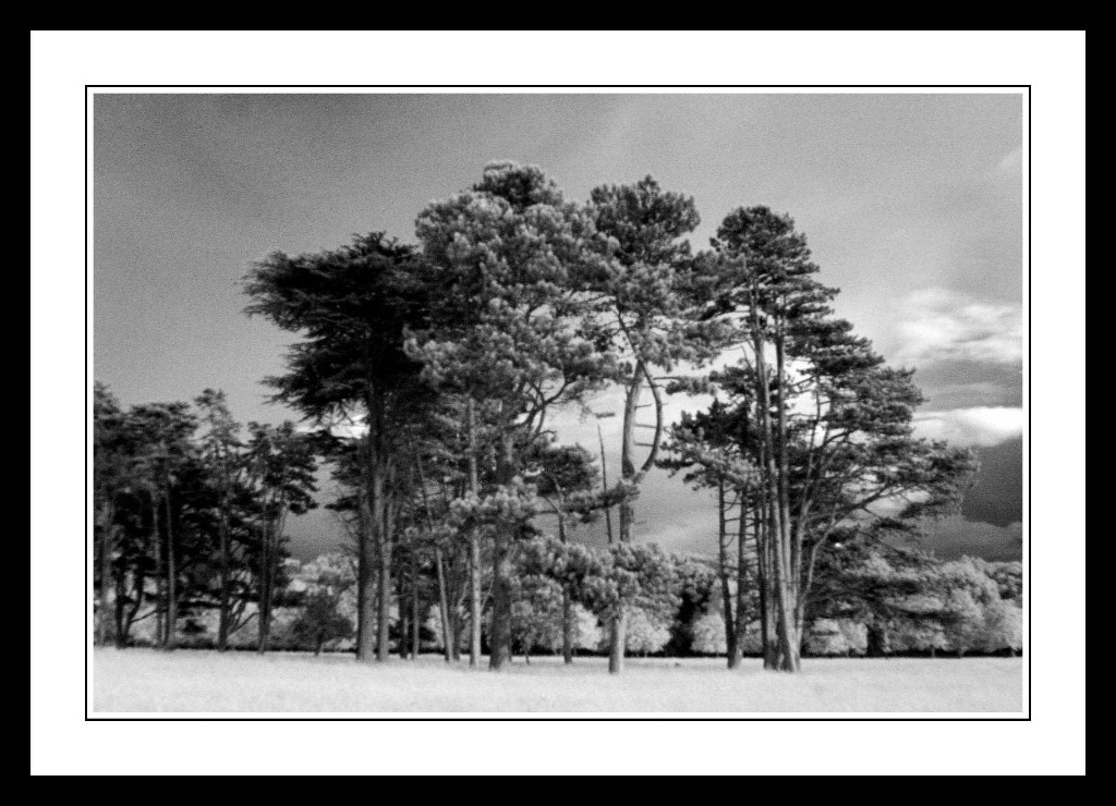 Tall-trees-near-Chesterfield-Avenue-in-The-Phoenix-Park1