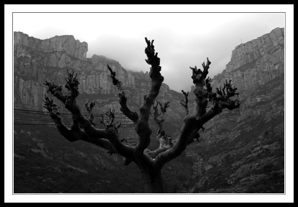 Tree-on-Montserrat